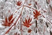 برف و باران در نیمه دوم آذر ۹۹ کل کشور را فرا میگیرد