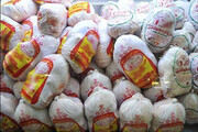 خبر توزیع مرغ تاریخ گذشته تکذیب شد