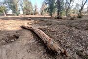 افزایش ۲۵ درصدی جرائم قطع درختان