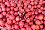 پیشبینی برداشت ۱۶۰هزار تن انار از باغهای مرکزی
