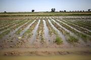خسارت ۵۱ میلیارد تومانی سیل به کشاورزی بوشهر