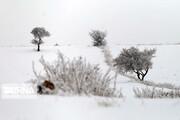 دلخوش باد و باران، برف و بوران نباشید، آلودگی هوا به زودی بر میگردد! | برف و باران تا کی ادامه دارد؟
