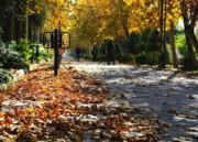 سمفونی پاییز در محلههای منطقه ۱۱ نواخته میشود