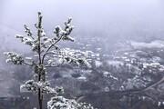 تصاویر   هزار جریب سفیدپوش از برف پاییزی