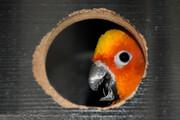 تصاویر   طوطیهای نایاب جهان در اراک