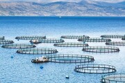 افتتاح پروژه پنج هزار تنی پرورش ماهی در قفس در قشم