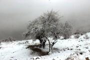 تصاویر   آخرین روزهای پاییز در کوههای ایلام