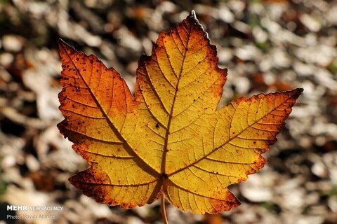 پاییز یاقکوه
