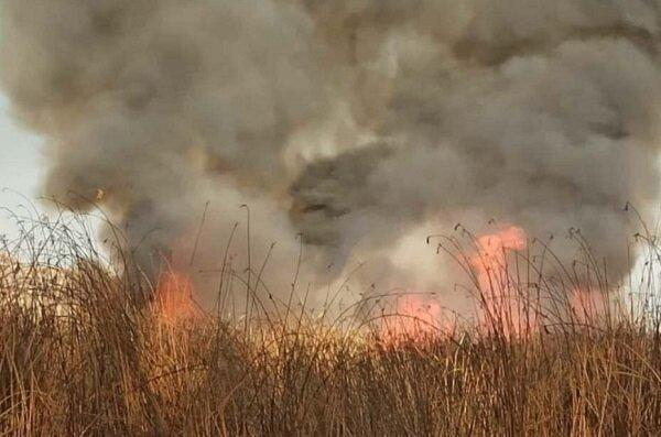 آتش سوزی نیزارهای زریبار