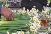 بهار نرگس در کویر | خامفروشی معضل بزرگ خوشبوی زمستانی