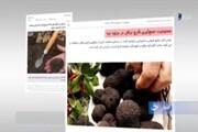 ویدئو | برداشت قارچ ترافل از جنگلهای هیرکانی ممنوع!