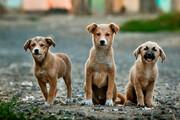 برچیده شدن بازار سگفروشها از حاشیه بزرگراه آزادگان
