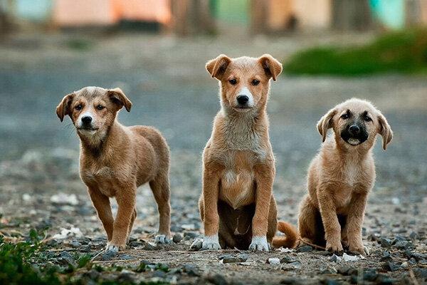بازار سگفروشان