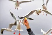 چرا نباید به پرندگان وحشی غذا بدهیم؟