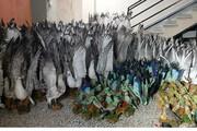 کشف ۳۰۸ پرنده تاکسیدرمی