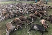کشتار ۵۴۰ حیوان در یک مهمانی شکار، مردم پرتغال را شوکه کرد