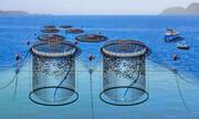 تولید ۴۵۰۰ تن ماهی به روش پرورش در قفس