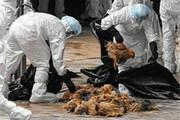 بالا گرفتن بحث بر سر منشاء آنفلوآنزای فوق حاد | پرندگان مهاجر یا پساب؟
