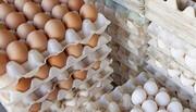 تخممرغ از اول بهمن ردهبندی میشود | ممتاز، معمولی، طرح خانوار؛ پایان عرضه فلهای