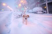 تصاویر | سه کشته در بدترین و سنگینترین برف ۵۰ سال اخیر اسپانیا