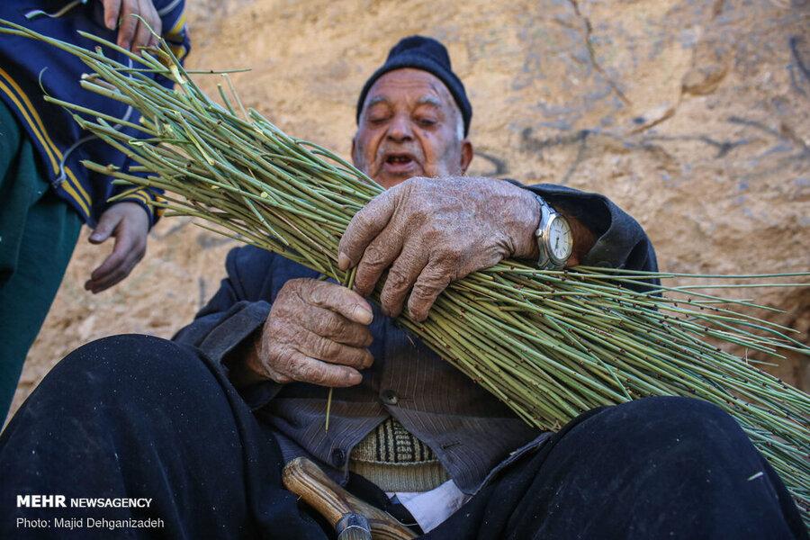تصاویر | هنرنمایی پیرمرد ۹۲ ساله و کمبینای مهریزی با تَرکهبافی