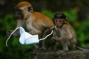 ماسکهای رها شده در طبیعت، خطر مرگ برای حیات وحش