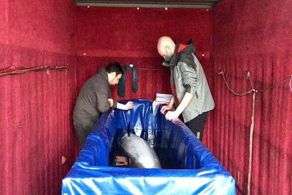 انتقال دلفین