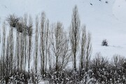 تصاویر | طبیعت ارومیه پس از بارش برف سنگین زمستانی