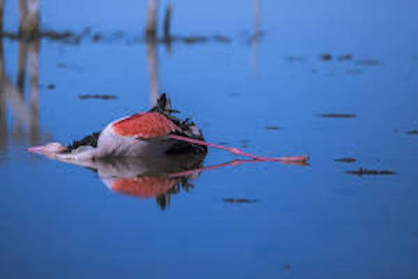 مرگ پرندگان