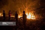 ویدئو | آتشسوزی گسترده در بزرگراه تهران - رشت