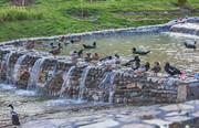 آنفلوانزای فوق حاد   «دو سه هزار» پرنده باغ پرندگان قم معدوم شدند