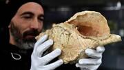 صدا | صدای صدف حلزونی ۱۸ هزار ساله را بشنوید | کشف یک ساز بادی کهن در فرانسه