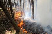 سه هکتار از جنگلهای بخش دودانگه ساری در آتش سوخت
