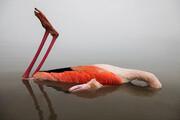 علت قطعی مرگ پرندگان میانکاله اعلام شد