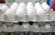 توزیع ۱۱ هزار تن تخم مرغ تنظیم بازار در ایران + قیمتها