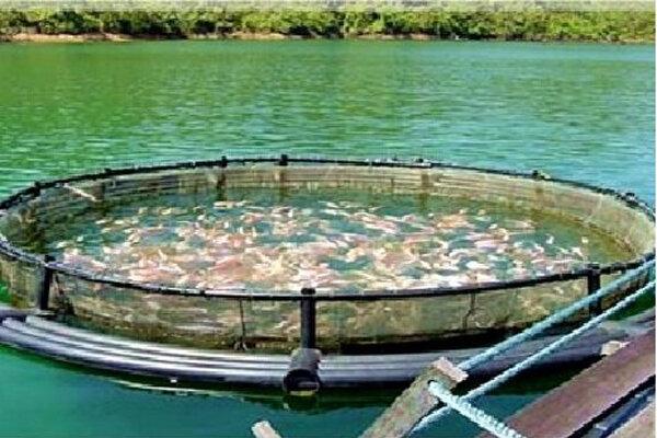 بهرهبرداری از بزرگترین مزرعه پرورش ماهی در قفس خاورمیانه در قشم