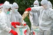 مهار ۲ کانون جدید آنفلوآنزای فوق حاد پرندگان در سقز