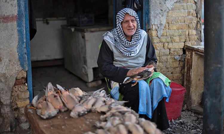 تصاویر | بازار پررونق شکار فلامینگوهای مهاجر در عراق و قاچاق به امیرنشینهای حاشیه خلیج فارس