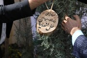 ابتکار شهرداری برای یادبود درگذشتگان کرونا   غرس نهال به نام علی انصاریان