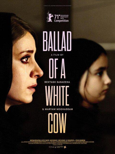 رونمایی از پوستر بینالمللی قصیده گاو سفید