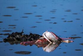 ویدئو | آن روی دیگر مرگ پرندگان در خلیج گرگان و میانکاله