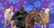 مراقب حیوانات خانگی خود باشید | کرونا حیوانات اهلی را آلوده میکند