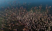 تصاویر | پایان مهاجرت پرندگان به میانکاله