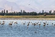 پرندگان تالاب کانی برازان قصد مهاجرت ندارند