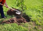 ۱۰۰۰ هکتار جنگلکاری در کمربند سبز پیرامون تهران | کاشت «درخت دوستی» و «درخت آفرینش» در تهران