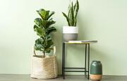 ۸ گیاهی که فضای آپارتمان را لوکس میکنند