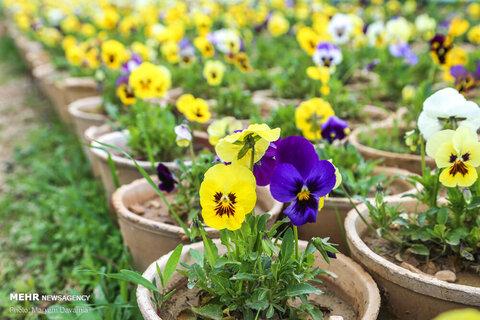 استقبال بهارانه