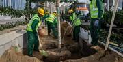 اجرای یک کیلومتر درختکاری در قلب پایتخت | بهار ۱۴۰۰؛ پایان کاشت چنارهای خیابان ولیعصر(عج) برای ثبت جهانی