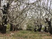 فناوری اسکن درختان در تهران بومیسازی شد