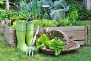 روشهایی برای کاشت سبزی ارگانیک در خانه